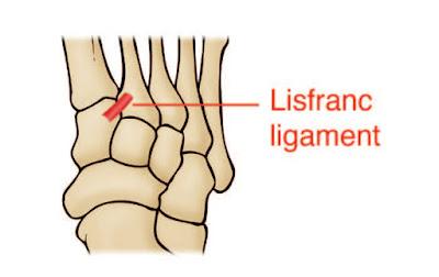 Lisfranc Ligament Anatomy Diagram - El Paso Chiropractor
