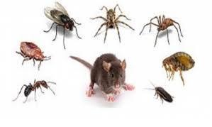Wow...!!! Ternyata Ada Lho Cara Alami Usir Semut, Tikus dan Serangga di Rumah, Please Share...!!!