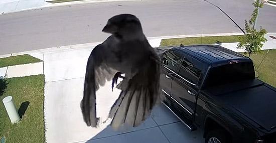 Vídeo de pássaro levitando intriga o mundo - como isso é possível - Capa