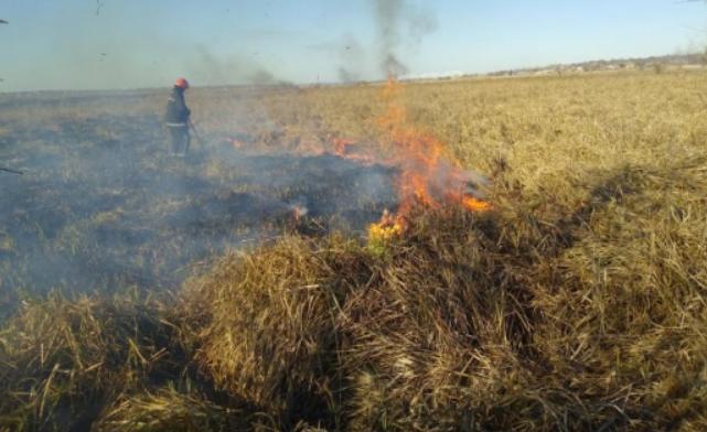 В Николаевской области поджигатели спалили десять гектаров камышей