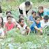 Hortas comunitárias ganham adeptos pelo Distrito Federal