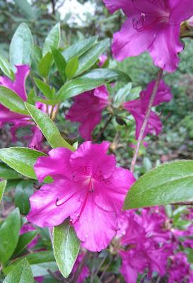 fleurs, balade, jardin, parc, parc procé, nantes, bullelodie