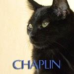 icone chaplin