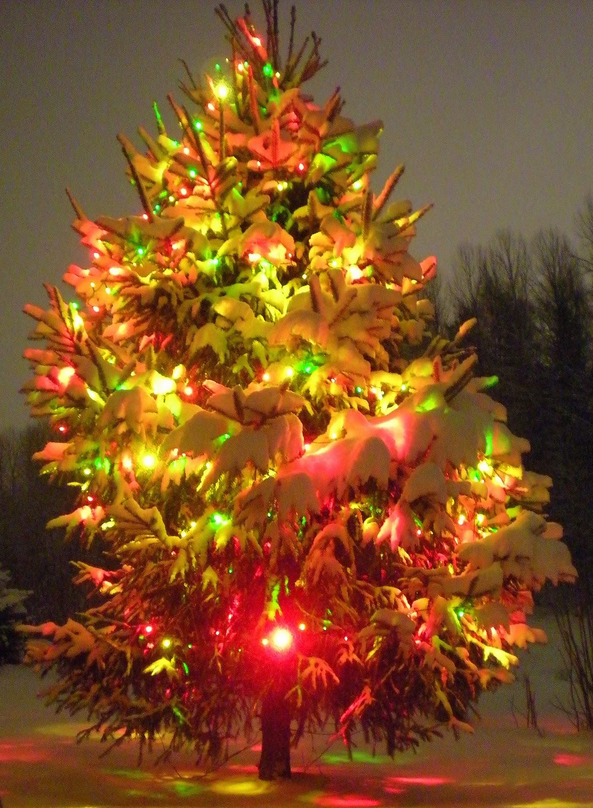 outdoor christmas tree lights are beautiful too