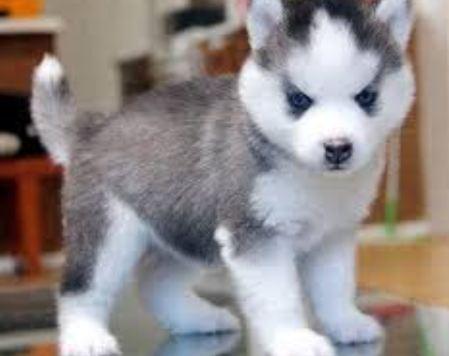 Cuidados Para Los Perros Perros De Raza Pequeña 5 Cuidados Para Ellos