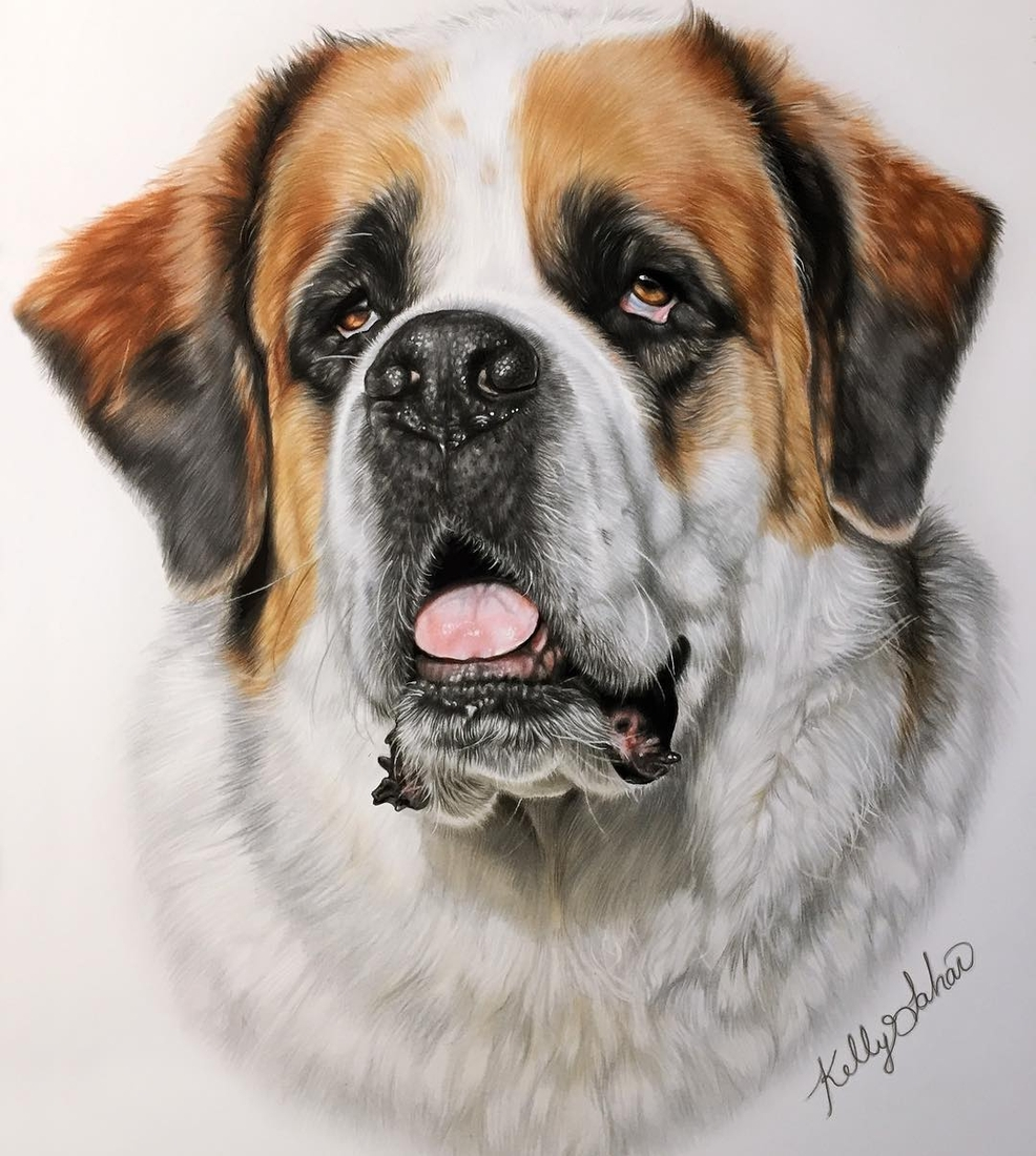 12-St-Bernard-Kelly-Lahar-Realism-with-Animal-Portrait-Drawings-www-designstack-co