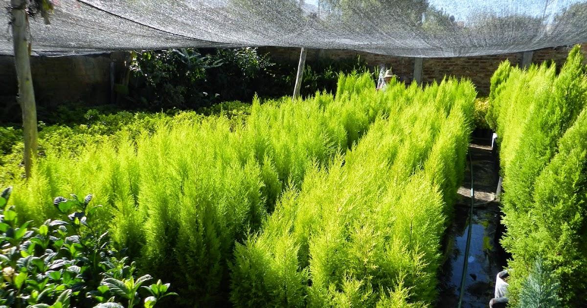 Vivero el ed n plantas ornamentales for Viveros ornamentales