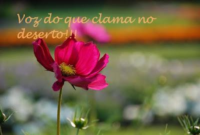 Louvando ao Senhor, flor, salmos, louvores