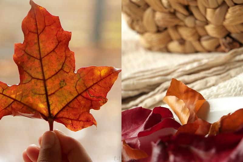 Blätter Pressen titantina s ideen basteln mit kindern herbstblätter konservieren