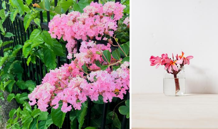floral walk finds - frangipani in glass