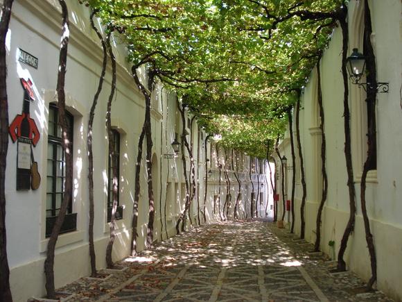 Street in Jerez, Spain
