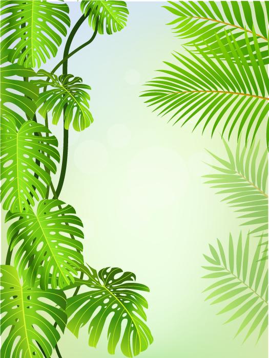 Marco o fondo con elementos tropicales
