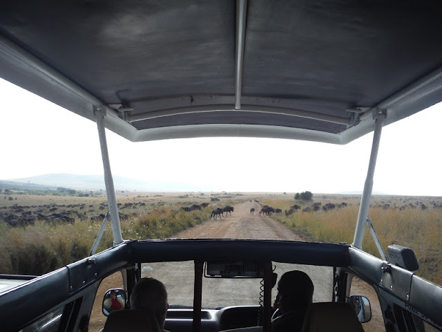 Ñus en migración en Masai Mara