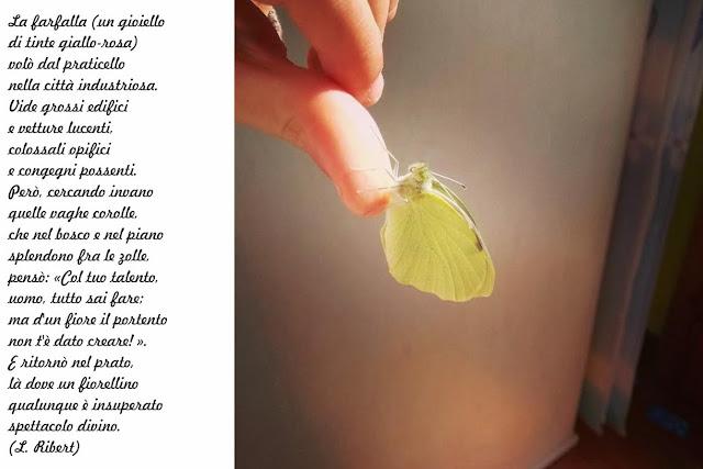 homeschooling e farfalle pesaro