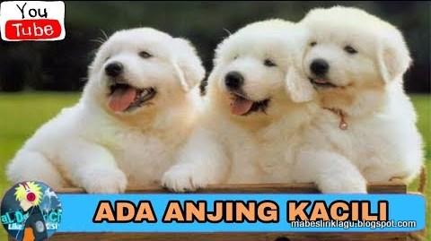Lirik Lagu Anjing Kacili