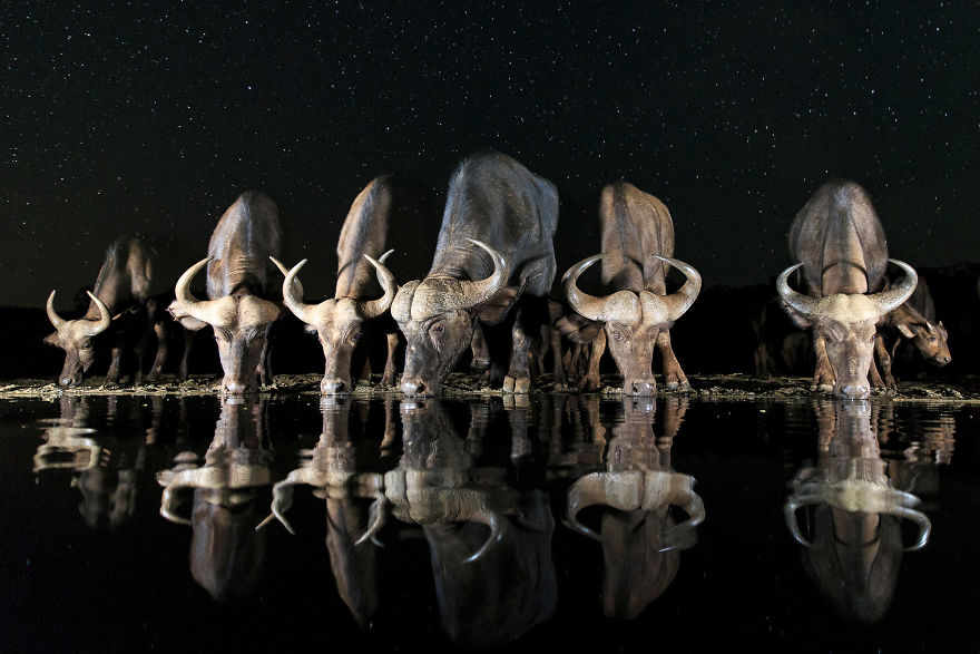 Andreas Hemb, Sweden (Open Competition, Wildlife)