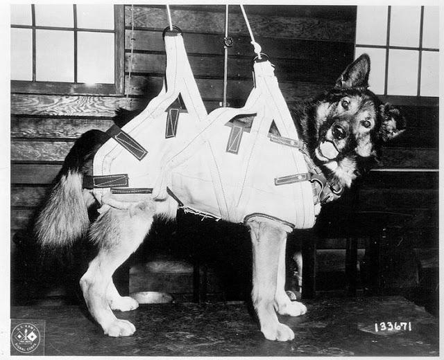 dogs World War II worldwartwo.filminspector.com