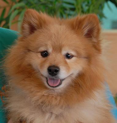 Nevada SPCA Animal Rescue: Poochie, a very sunny ...