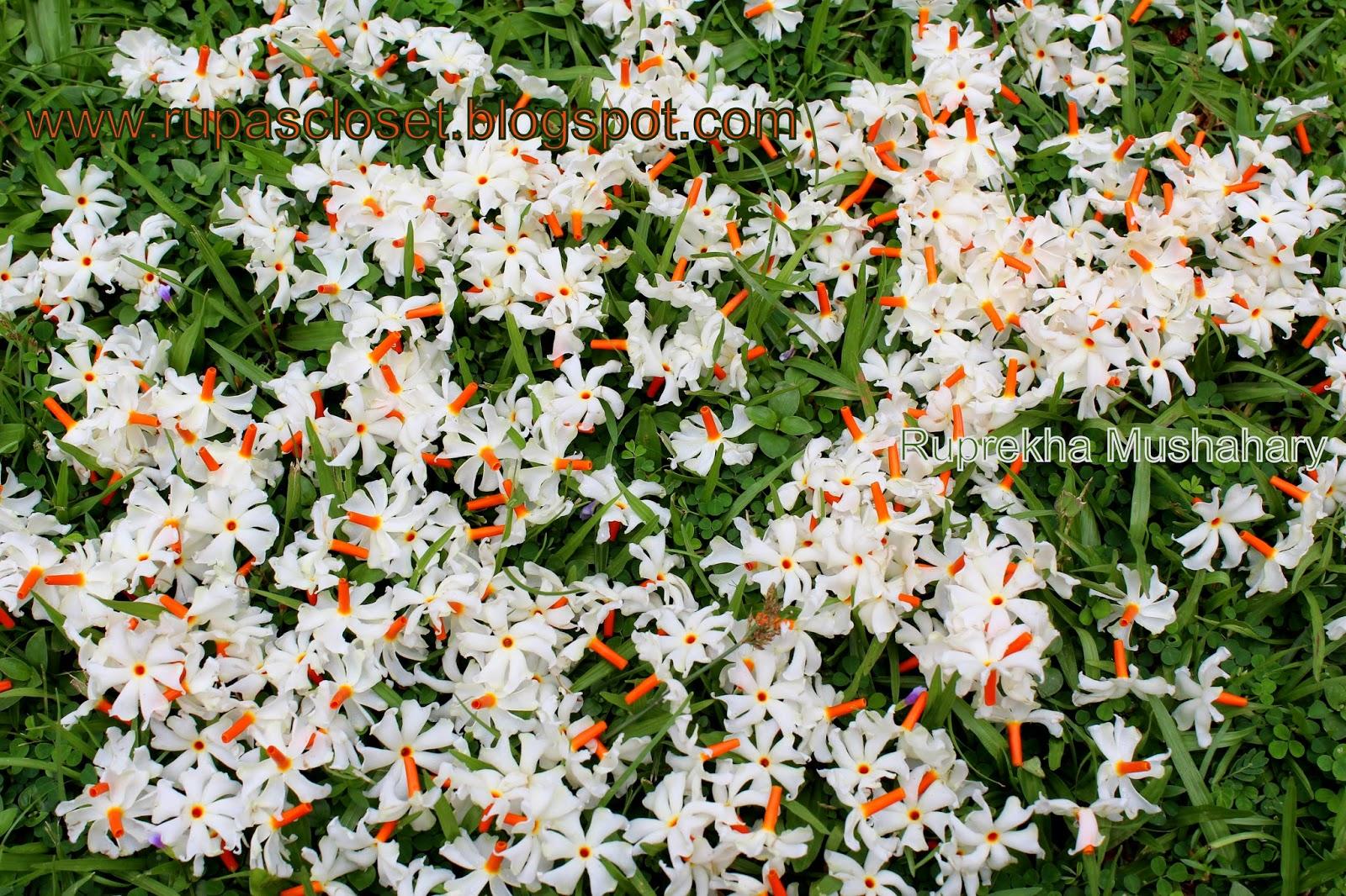 Malli Flower Name In English Flowers Online 2018 Flowers Online
