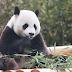 'Diplomacia Panda': Mamíferos chineses são apresentados ao público coreano