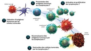 Les cellules du système immunitaire