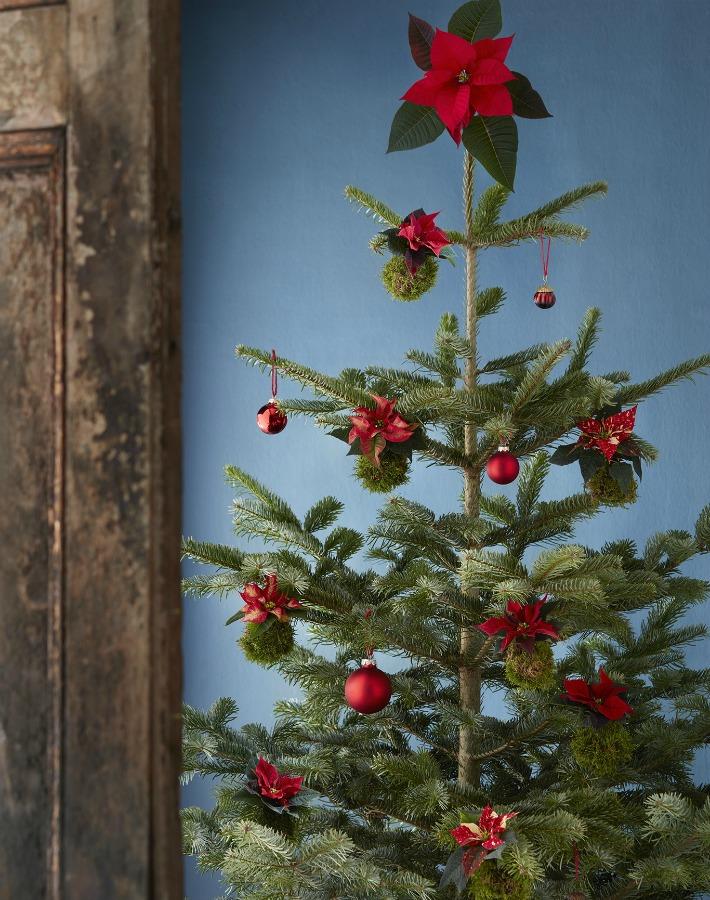 Kokedamas de poinsettia para Navidad
