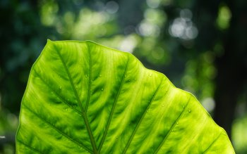 Wallpaper: Greenish Beauty from Nature