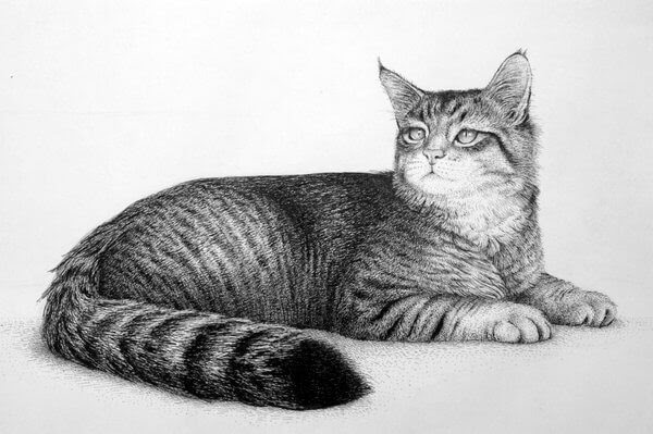 12-Cat-Rens-Ink-Animal-Wildlife-Pen-and-Ink-Stippling-Drawings