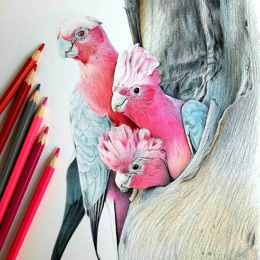 06-Bele-Birds-Drawings-www-designstack-co