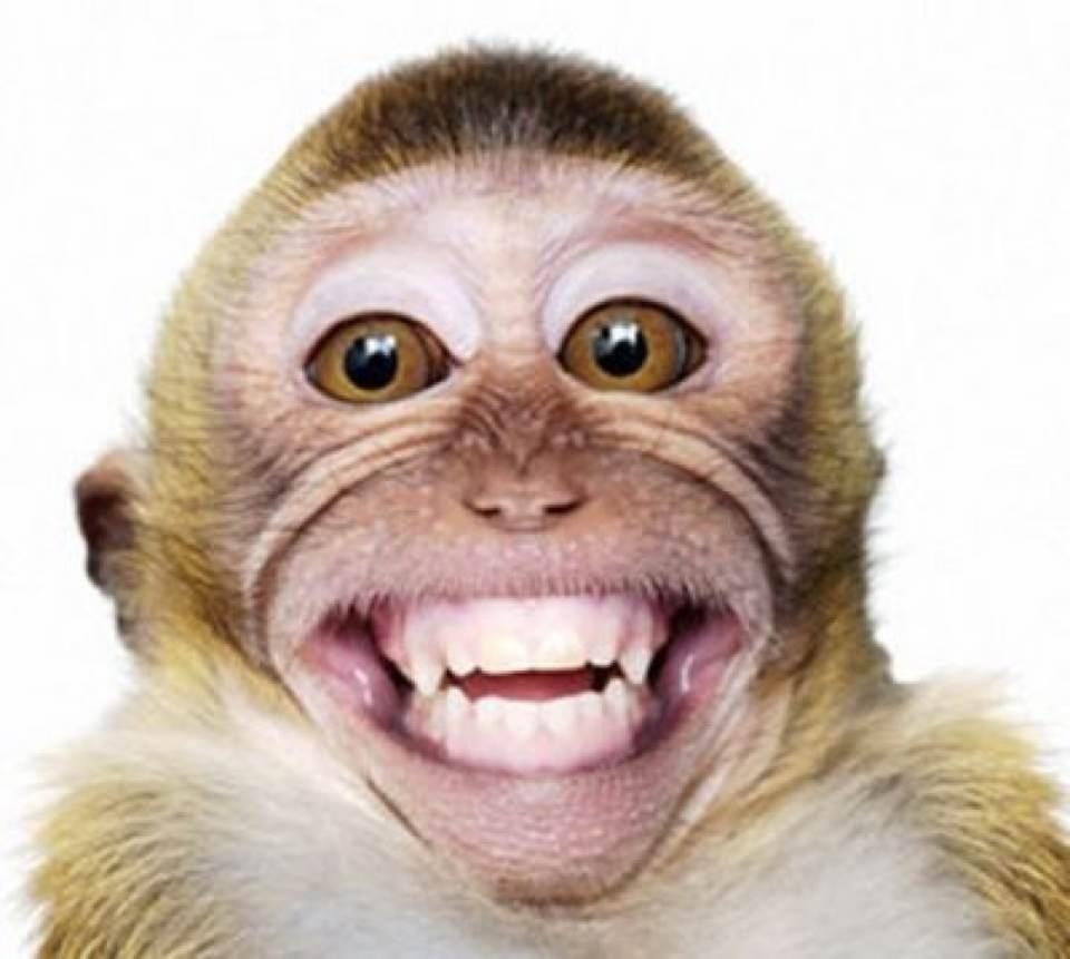 Unduh 89+ Gambar Monyet Lucu Banget Terbaik Gratis