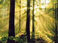Apa itu Efek Ray of Light?