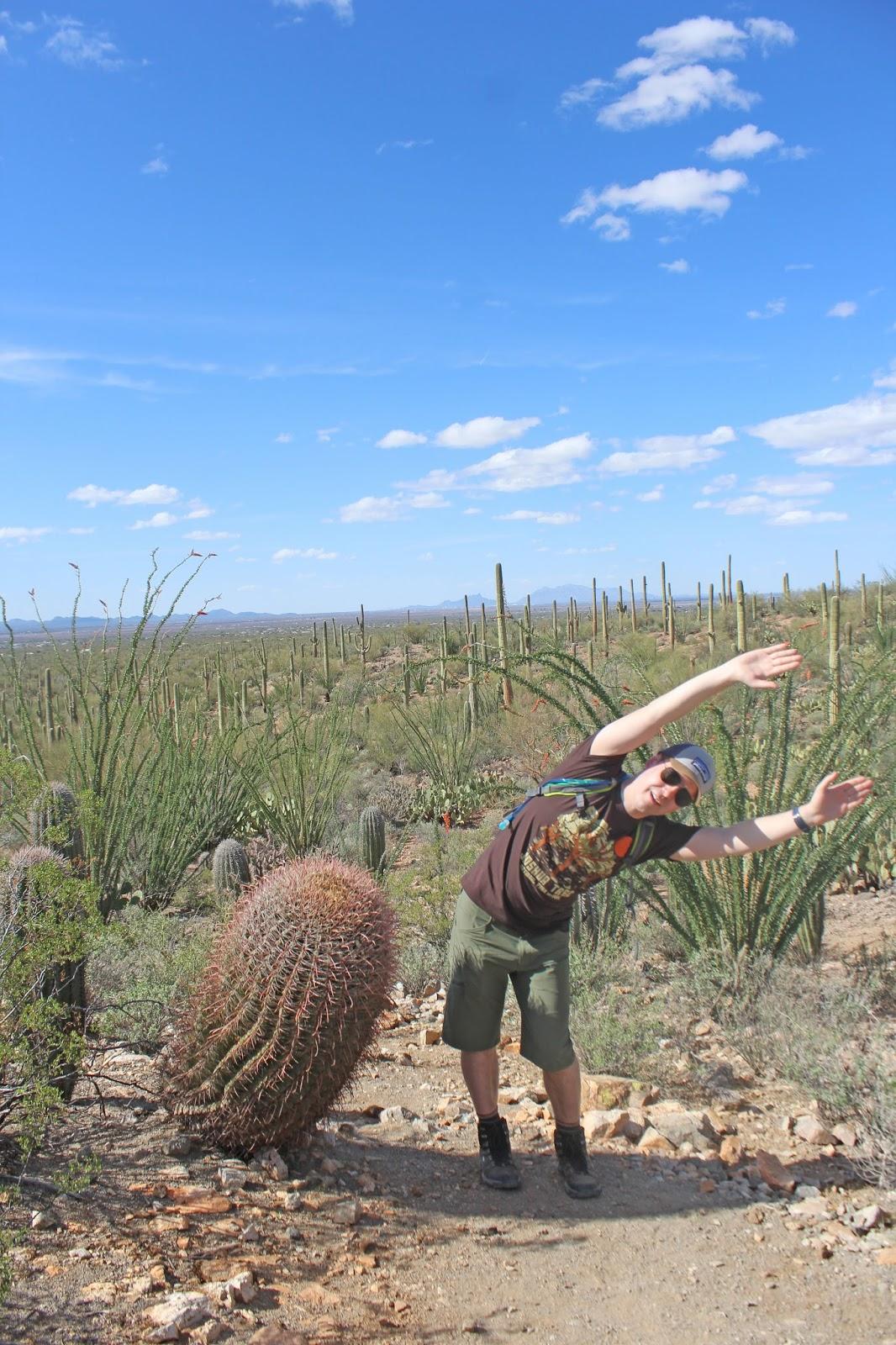 saguaro national park day trip 11