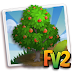 FV2 Mabolo Tree  ( tree,elder,heirloom )