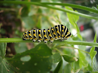 The spiritual journey has different phases, and so we begin like caterpillars.