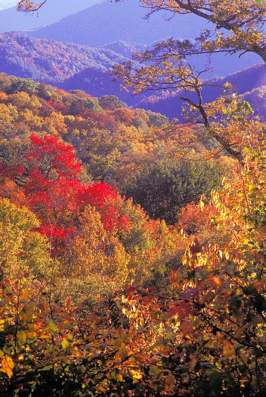 Visit The Great Smoky Mountains in North Carolina This Fall