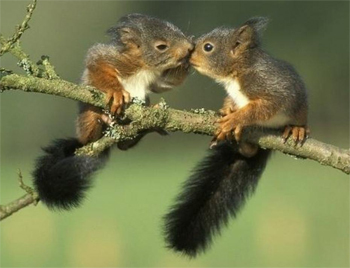 image of two baby squirrels sitting on a branch, nuzzling each other's faces