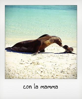 Leoni marini in spiaggia alle Galapagos