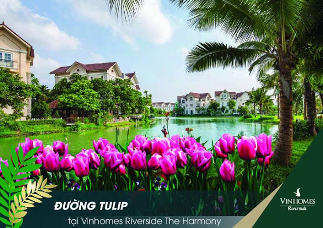 Đường Tulip