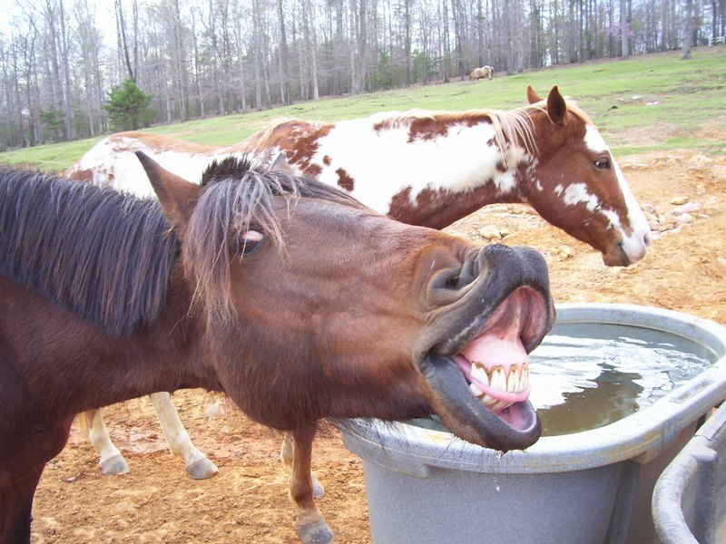 Funny wallpapers|HD wallpapers: Funny Horse Faces