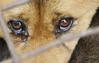 Câmara aumenta pena de maus-tratos contra animais e zoofilia