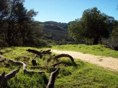 spiritual avoidance, tree, regional park, spiritual awakening, spiritual bypass