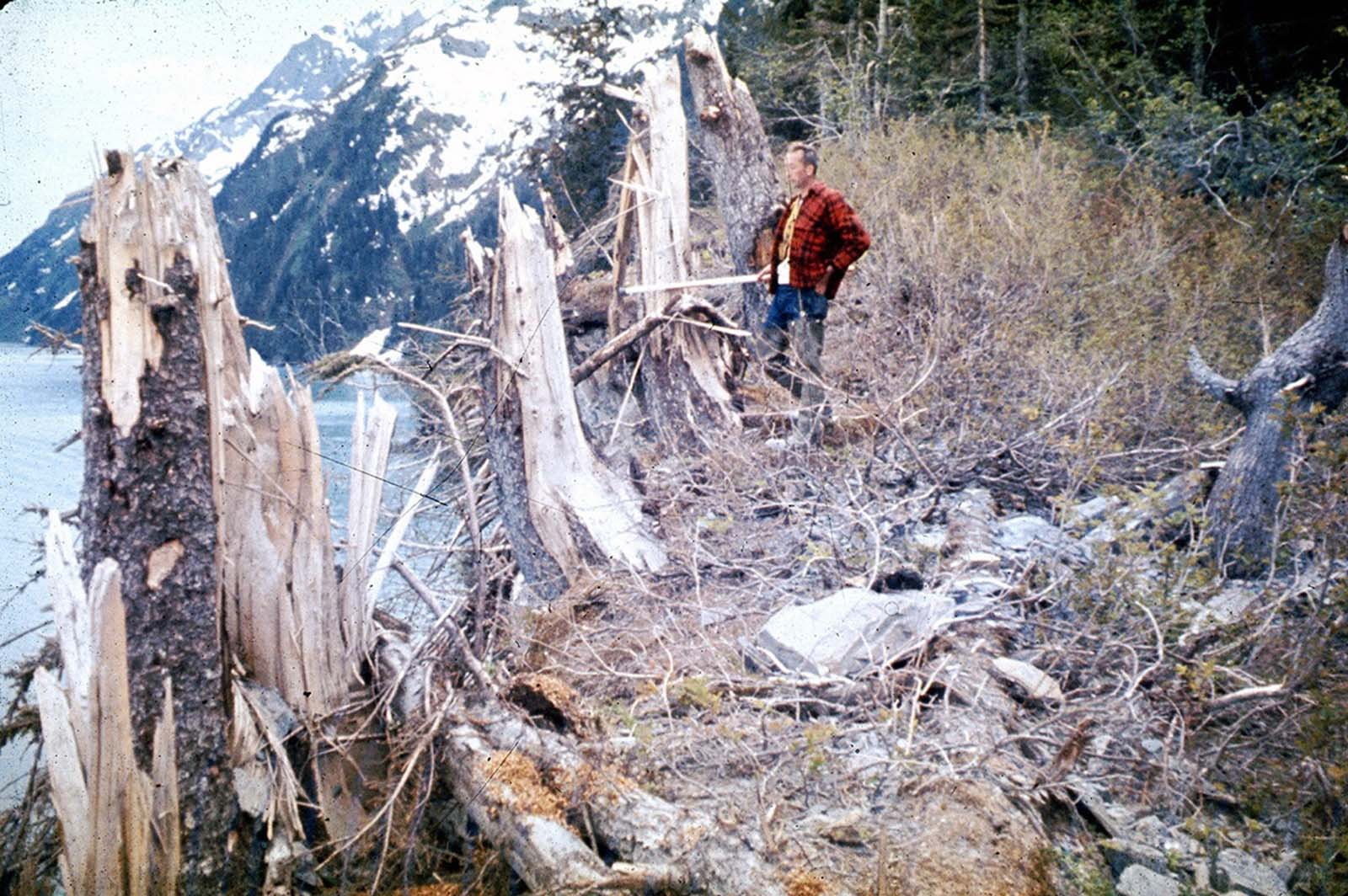 Trees up to 24 inches in diameter and 100 feet above sea level were broken and splintered by the surge wave generated by an underwater landslide in Port Valdez on Prince William Sound.