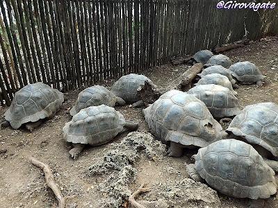 Zanzibar Prison Island tartarughe