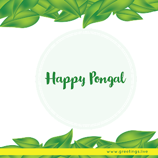 South Indian Happy Pongal festival Greetings High quality png image
