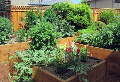 Taproot Garden Design Amp Fine Gardening Laurence Residence
