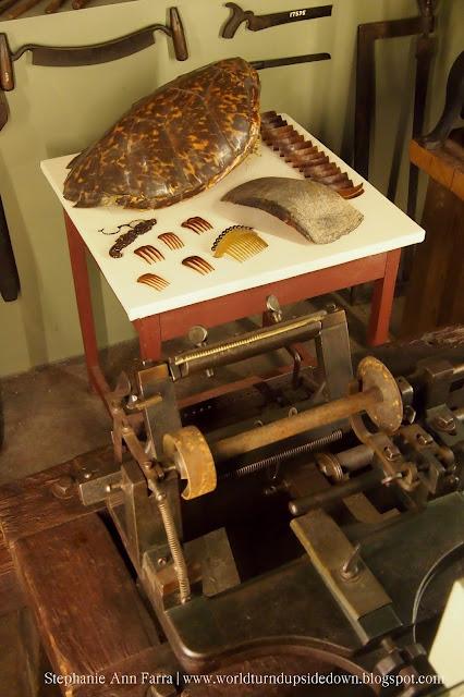 Mercer Museum Terrapin Tortoise Shell
