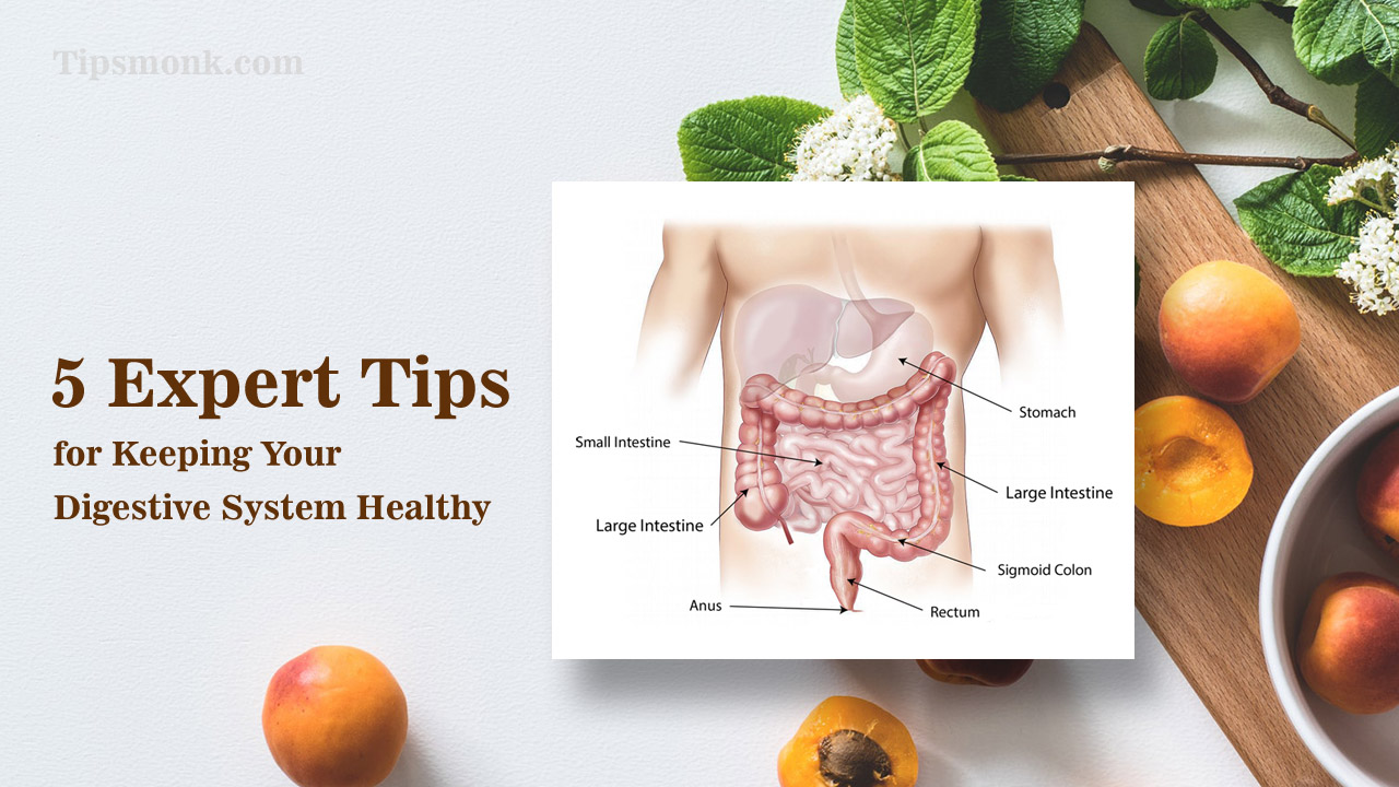 5 Expert Tips for Keeping Your Digestive System Healthy