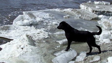 10 Stories of Lifesaving Dogs   Mental Floss