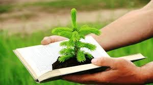 Os 4 Princípios do Direito Ambiental