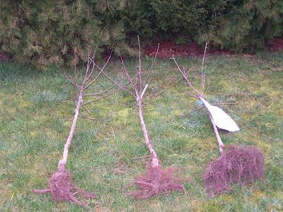 Pour votre santé et votre porte-monnaie, plantez des arbres fruitiers !